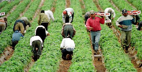 migrantworkersrex_468x236